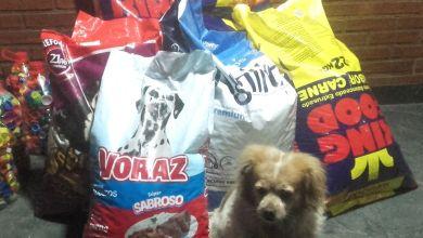 """Photo of """"Tapitas Para Todos"""": las colectas para ayudar a perros y gatos callejeros"""