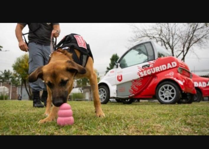 Les buscan nombres: La Secretaría de Seguridad de Morón adoptó dos cachorras que se dedicarán a detectar narcóticos