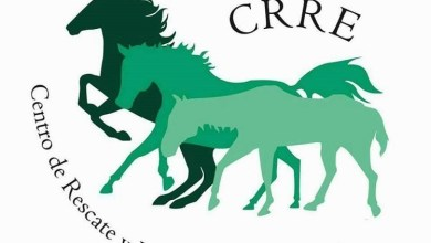 Photo of Magnífica labor del CRRE en la recuperación de caballos maltratados