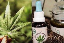 """Photo of """"Hay una necesidad de legislar y regular el uso del cannabis medicinal"""""""