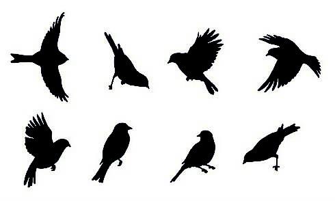 Plantillas de aves para decorar paredes