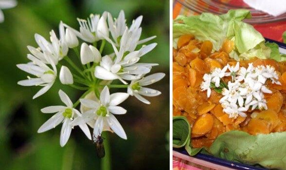 Cocina con flores de ajo