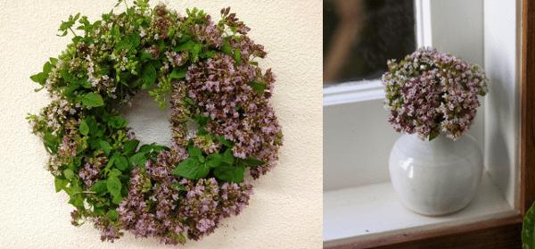 Flores de orégano usos para la decoración