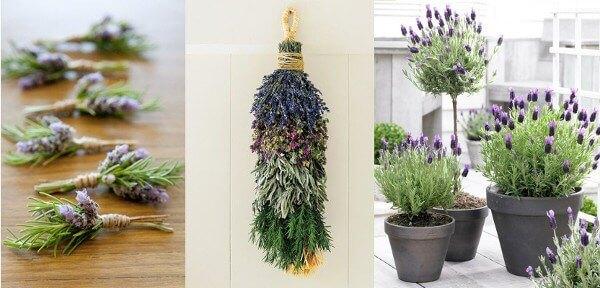Flores de romero usos decorativos