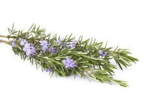 Flores de romero usos en la cocina