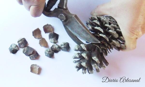 Cortando las escaqmas de una piña de pino