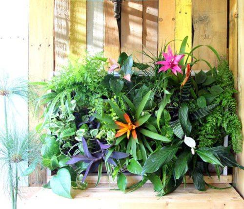 Jardin vertical con palets modelo tropical