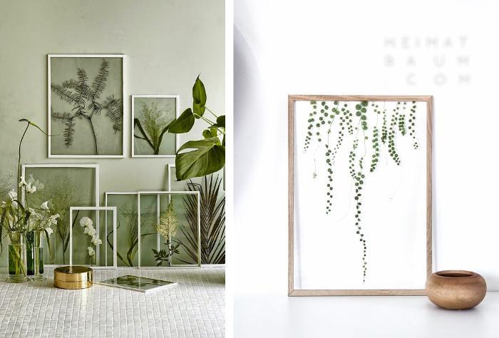Cuadros de plantas para decoracion