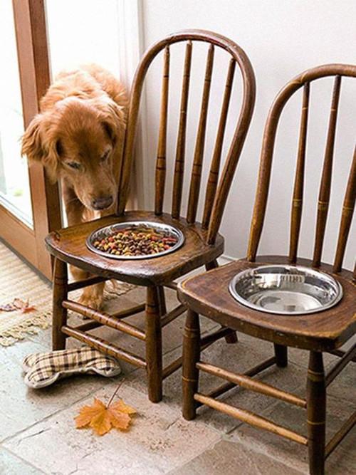 Reciclar una silla y hacer un comedor para una mascota