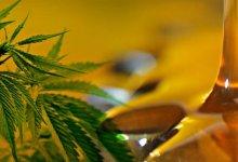 cannabis-medicinal-diarioasuncion