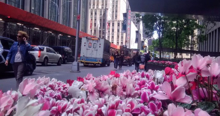 Colores de Primavera en New York City