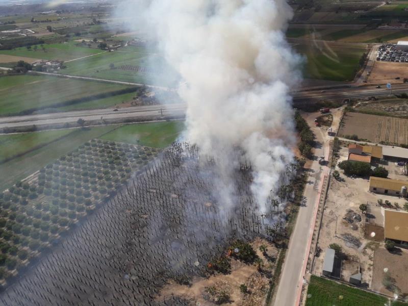Herido un bombero en un incendio que ha arrasado 2.500 palmeras en Catral