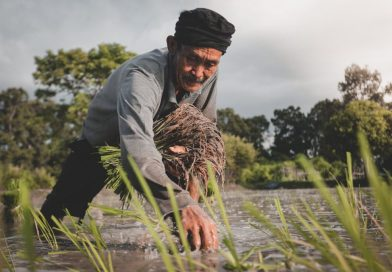 man in grey long sleeved shirt planting rice