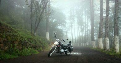 wood road dawn landscape