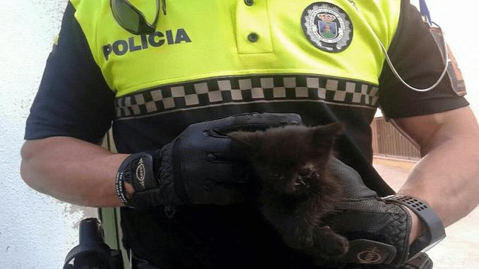 La Policía Local de Jaraíz de la Vera rescata a un gatito del interior de un coche
