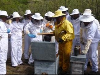 20210524_apicultura