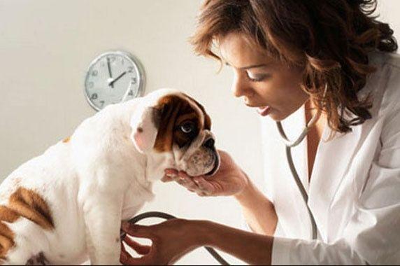 día del veterinario