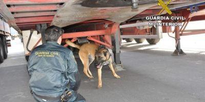detenidos, inmigrantes, Almería, camiones, autobuses,