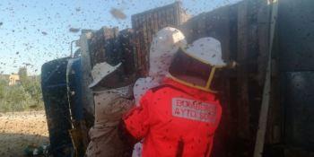 Los bomberos de Soria retiran los panales de abejas