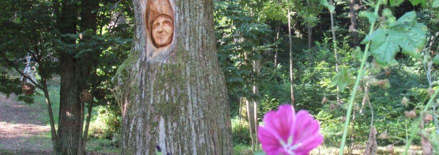 respirando la saggezza dei castagni secolari sul sentiero dei Sarvanot