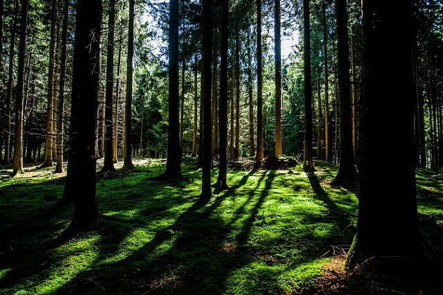 bosque Juan Pachón García