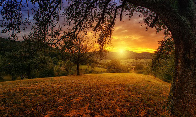 nature--