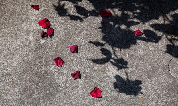 La Rose de Lesbos