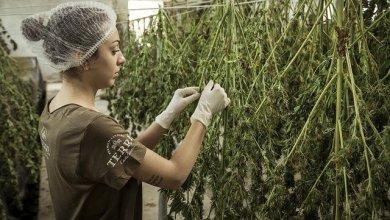 Marihuana Recreacional a la venta en Illinois