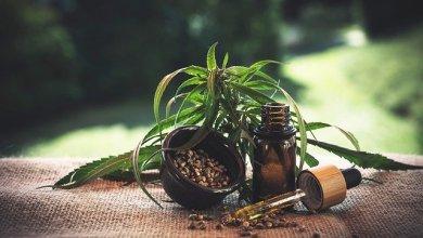 Photo of Uso de Cannabis legal en Illinois afectará permisos de armas y otras licencias