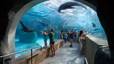 Photo of Zoológico de St.Louis abrirá el 13 de Junio; Visitantes deberán hacer cita previa.
