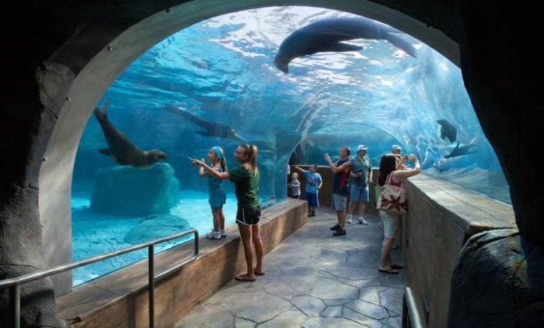 Zoológico de St.Louis