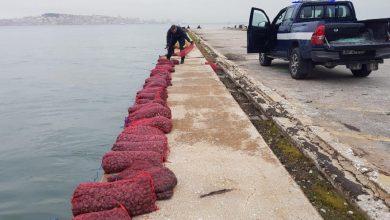 Photo of Polícia Marítima apreendeu 600kg de amêijoa-japonesa no Barreiro
