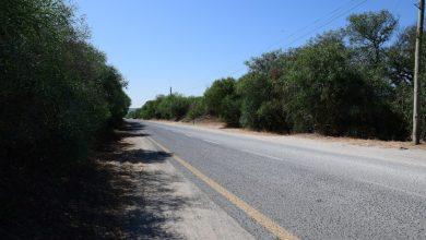 Photo of Estrada Florestal da Costa da Caparica com obras de requalificação