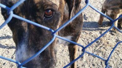 Photo of PAN Lisboa quer esclarecimentos da autarquia sobre morte de 7 cães após incêndio