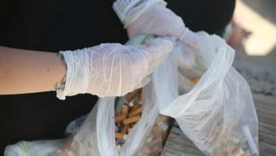 Photo of Quase 200 quilos de lixo recolhidos nas praias de Almada