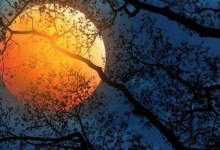 Photo of 'Lua do Caçador' nos céus esta noite