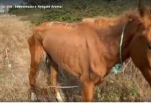 Photo of IRA denuncia situação de três cavalos na Moita