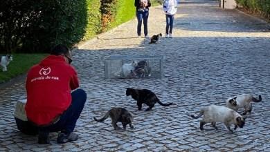 Photo of Alcácer do Sal prossegue com controlo populacional de gatos errantes