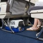 Viagem com animais de estimação exige cuidados especiais
