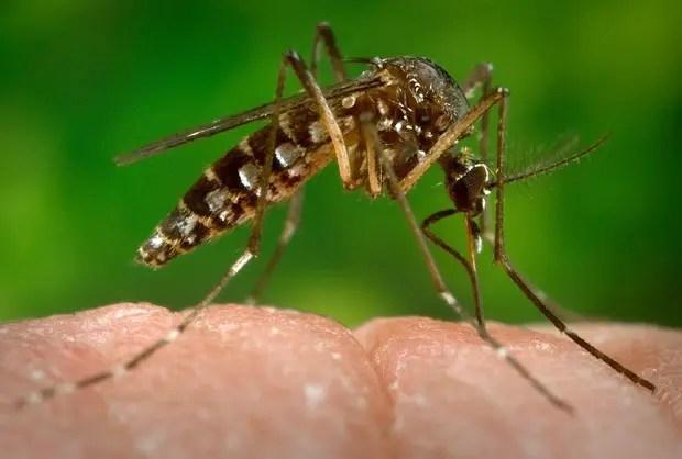 Emirates oferece reembolso de voos para regiões com zika