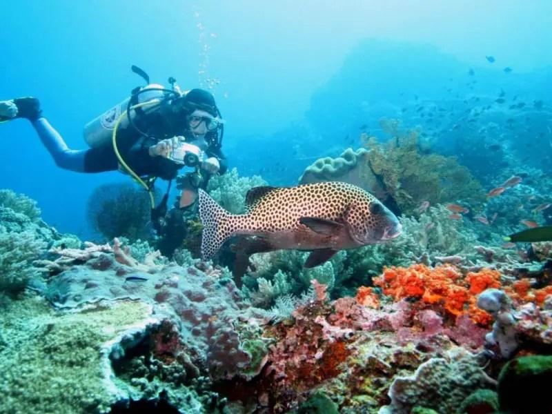 Confira lista de lugares imperdíveis para mergulho pelo mundo