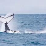 Tivoli Ecoresort Praia do Forte promove observação de baleias