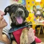 Ibis Paulista realiza evento de adoção de cães e gatos