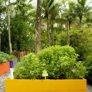 horta organica-sofital-guaruja-jequitimar-manjericao
