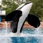 Seaworld anuncia morte da orca Tilikum
