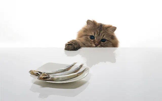 cat-and_fish