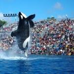 Parques SeaWorld na Flórida fecham e protegem animais