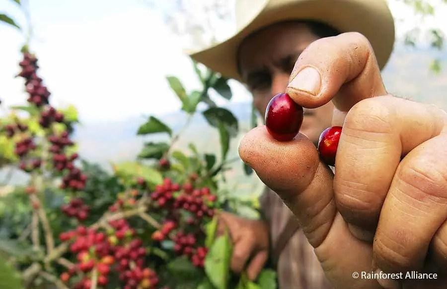 RIU disponibiliza em seus hotéis café cultivado em plantações sustentáveis