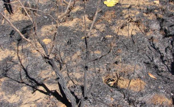 Chapada dos Veadeiros se recupera em vida após incêndio