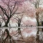Ásia Total oferece pacotes Japão Cerejeiras e África do Sul a preços imbatíveis